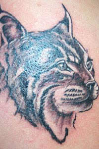 Wildcat tattoo